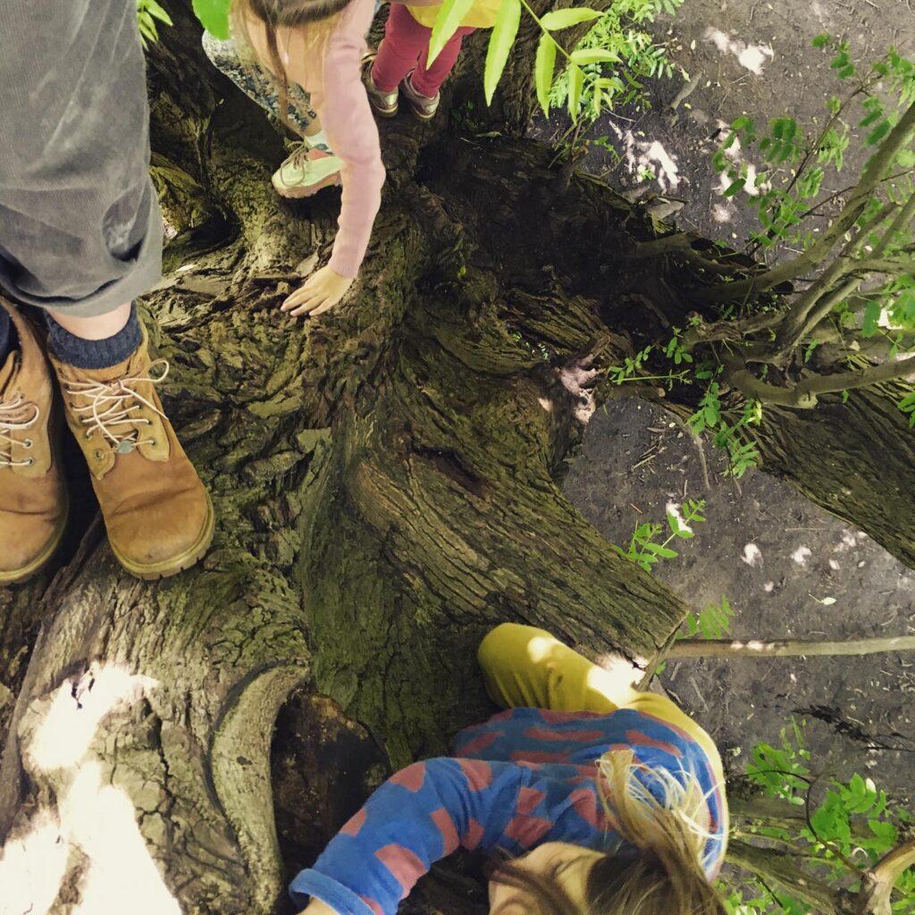 bomen klimmen natuurfontein